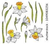 hand drawn vector narcissus set.... | Shutterstock .eps vector #1049083256