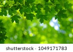 Green Leaves On The Spring Tre...