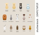 dog breeds set  large and... | Shutterstock .eps vector #1049176919