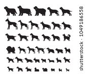 dog breeds  silhouette set ... | Shutterstock .eps vector #1049186558