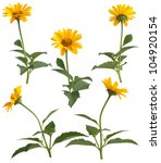 Set Of Yellow Field Flowers...