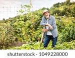 senior man gardening in the... | Shutterstock . vector #1049228000