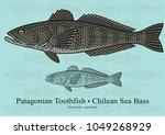 Patagonian Toothfish  Chilean...