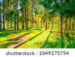 spring forest pathway landscape | Shutterstock . vector #1049275754