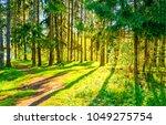 spring forest pathway sunlight... | Shutterstock . vector #1049275754