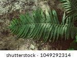 green summer fern leaf on the... | Shutterstock . vector #1049292314