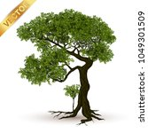 beautiful tree realistic  on a... | Shutterstock .eps vector #1049301509