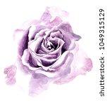 watercolor rose flower. it's... | Shutterstock . vector #1049315129