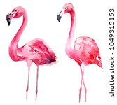 watercolor pink flamingo set.... | Shutterstock . vector #1049315153
