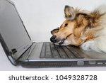 photo of dog sleeping on... | Shutterstock . vector #1049328728