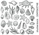 Sea Shells Vector Line Set....