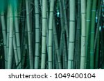 Texture Of Green Bamboo
