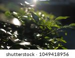trees leaf  nature green... | Shutterstock . vector #1049418956