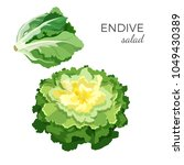 endive salad fresh organic... | Shutterstock .eps vector #1049430389