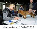 estimating breed. somali cat... | Shutterstock . vector #1049451713