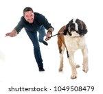 young saint bernard and owner... | Shutterstock . vector #1049508479