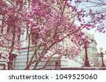 pink magnolia trees outside...   Shutterstock . vector #1049525060