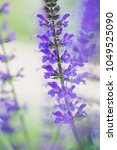 close up of a beautiful purple...   Shutterstock . vector #1049525090