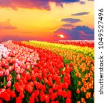 Colorful Growing Red  Pink  Re...