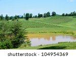 Vineyards Of North Georgia  Usa.