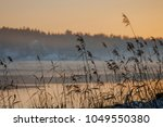 wetlands with reed | Shutterstock . vector #1049550380
