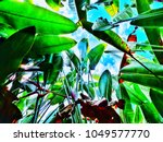 the green leaf that extends to... | Shutterstock . vector #1049577770