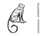 hand drawn monkey. sketch ... | Shutterstock .eps vector #1049614736
