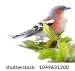 spring in form of bright... | Shutterstock . vector #1049631200