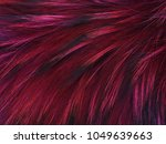 texture raccoon fur dyed in...   Shutterstock . vector #1049639663