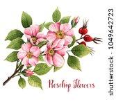 Rosehip Flowers  Watercolor...