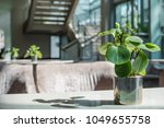 baby rubber plant decorate in... | Shutterstock . vector #1049655758