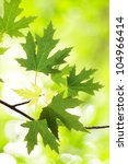 beautiful branch with green...   Shutterstock . vector #104966414