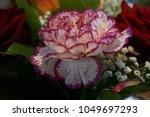 Flower Pink Red White - Fine Art prints