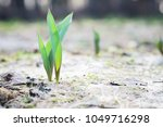 the seedling are growing from... | Shutterstock . vector #1049716298