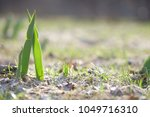 the seedling are growing from... | Shutterstock . vector #1049716310