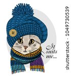 Stock vector vector cat with blue knitted hat and scarf hand drawn illustration of dressed cat 1049730539