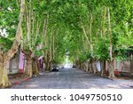avenue with sycamore trees in... | Shutterstock . vector #1049750510