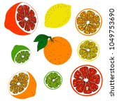 collection of citrus fruit ... | Shutterstock .eps vector #1049753690