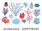 set of different corals and... | Shutterstock .eps vector #1049758190