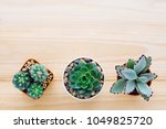 cactus and succulent plants on... | Shutterstock . vector #1049825720
