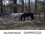 trio of horses grazing in the... | Shutterstock . vector #1049905220