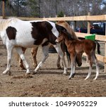 rescue mare and foal at a farm | Shutterstock . vector #1049905229