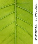 leaves of texture | Shutterstock . vector #1049926538