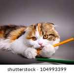 Stock photo little cute kitten playing with colorful pens 104993399