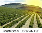 view farm with coffee...   Shutterstock . vector #1049937119