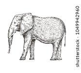 hand drawn elephant. sketch ... | Shutterstock .eps vector #1049942960