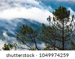 natural forest of tropical...   Shutterstock . vector #1049974259