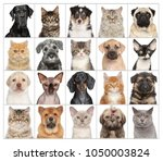 portraits of animals cats and... | Shutterstock . vector #1050003824
