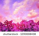 blooming purple lilac flowers... | Shutterstock . vector #1050008438