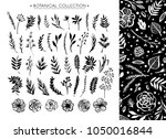 botanical collection with... | Shutterstock .eps vector #1050016844